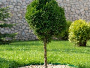 снимка озеленяване на двор